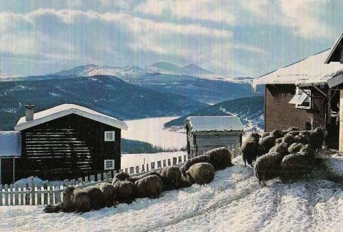 dgnskåbu1970