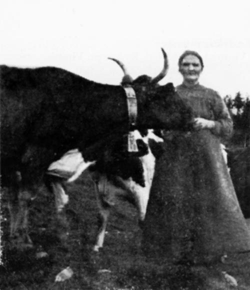Anne Hov som fann opp brunosten, (Bilde frå Bank i bygd og by)