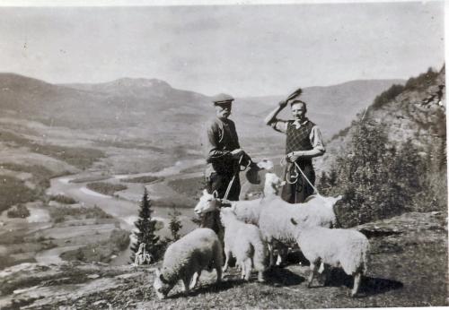 aNr. 104 Kristian Hesteskobakken og Ole O. Hage på sauesanking i Nedre Skar