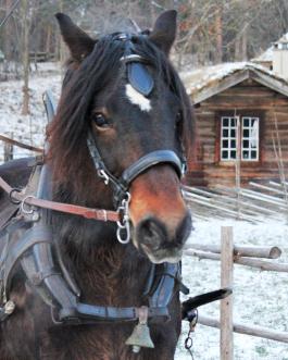 hestehode